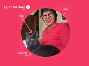 cat sitting - cat sitter