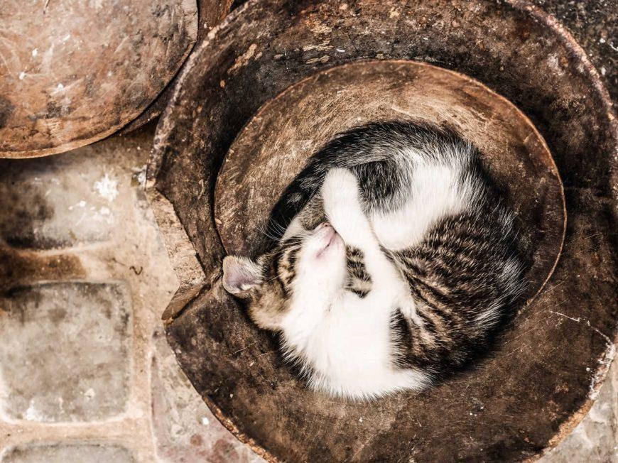Dormir- O seu gato não deixa dormir…