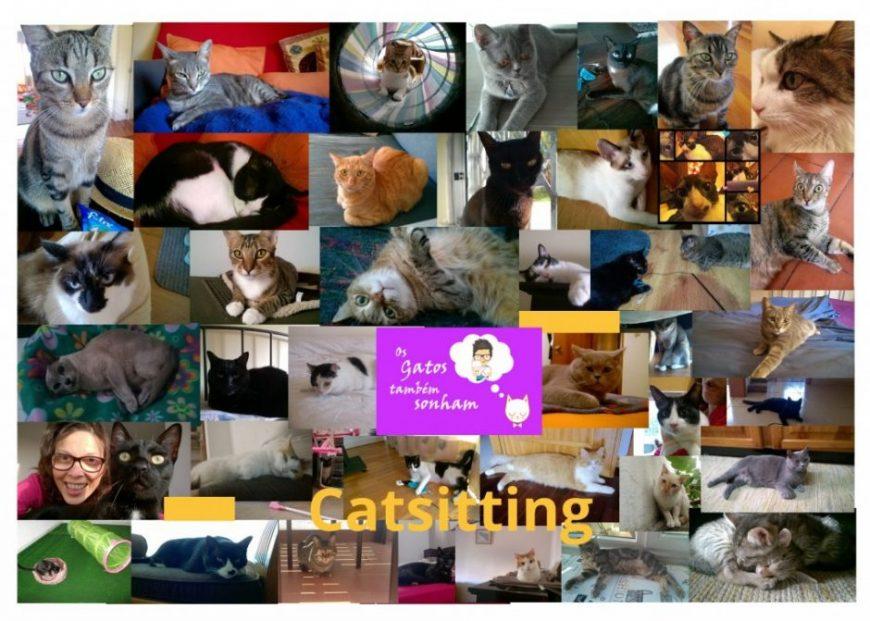Os gatos também sonham – Cat sitting ao domícilio