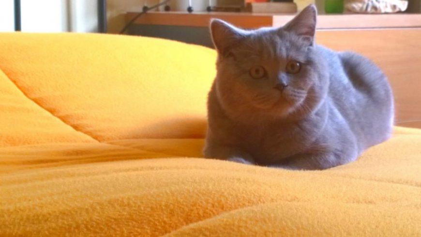 Gato Simão como na sua própria casa