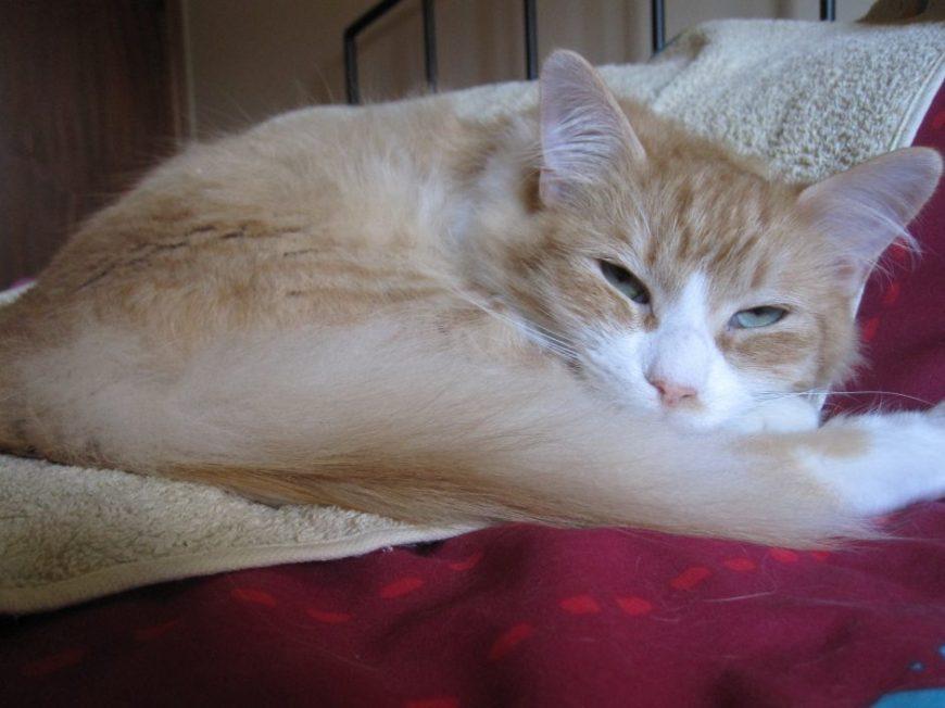 Comportamento dos gatos – Sessões de ajuda