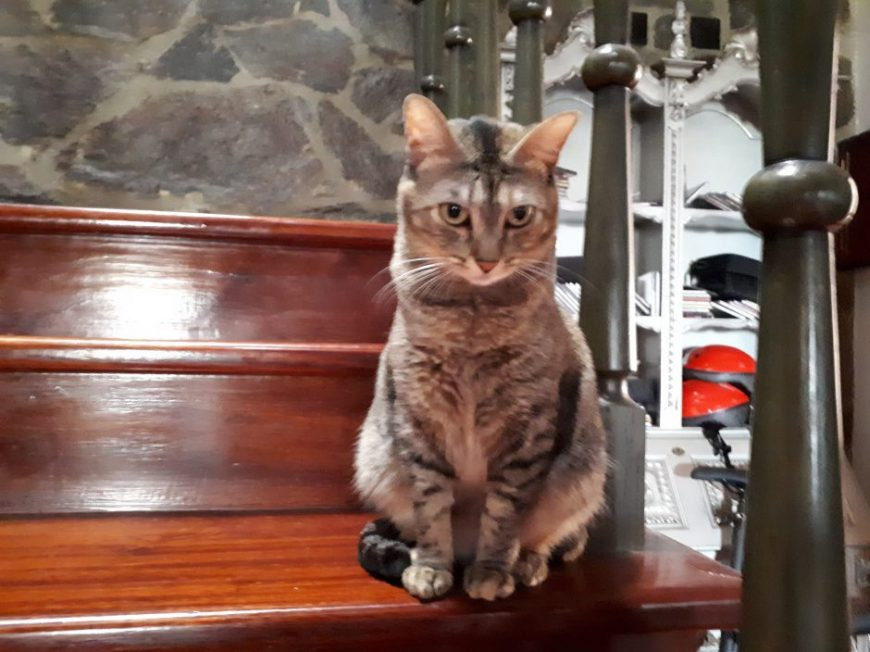 Cat sitting ao domicilio no Funchal