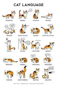 abc do gato - c de comportamento