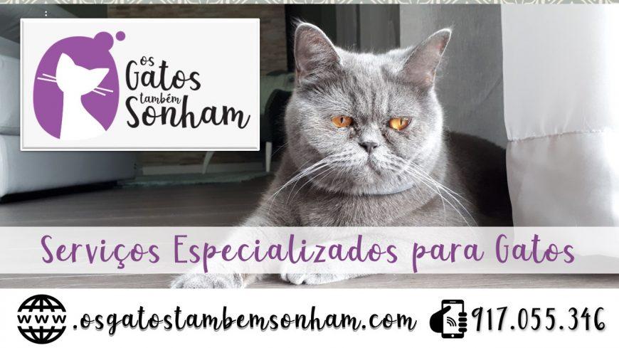 Serviços especializados para gatos